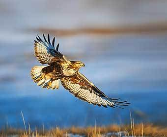 Which Bird of Prey Are You?