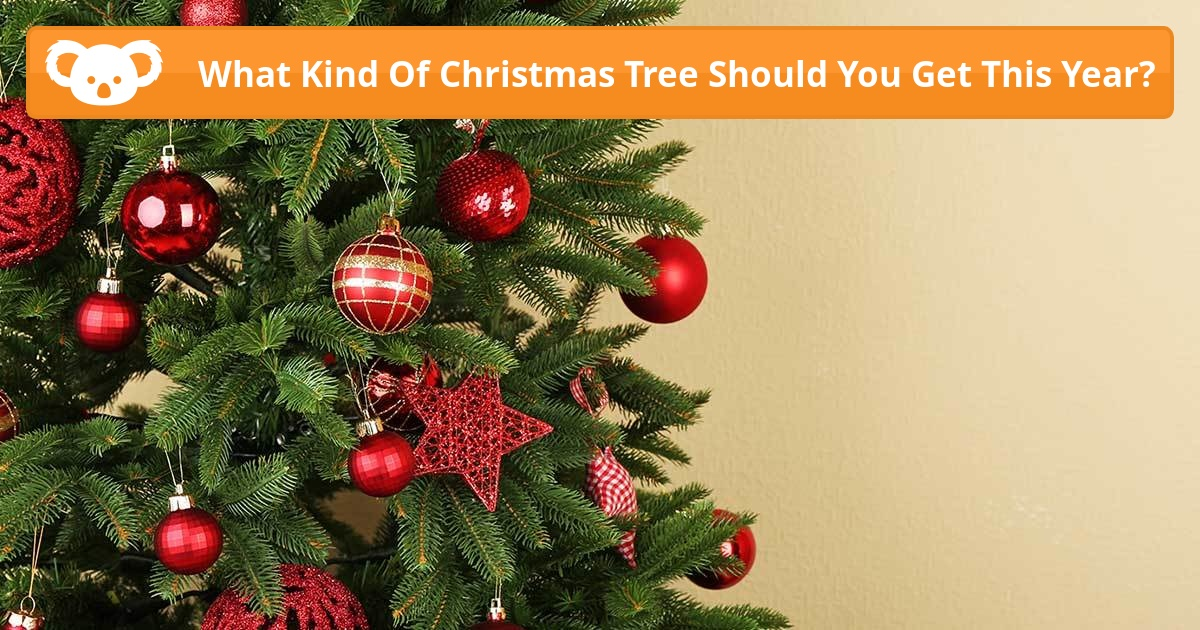 Top 28 When Should You Get A Christmas Tree Real Or
